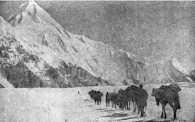 horse caravan on the glacier